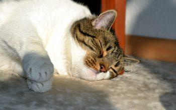 Kater Mailo vom Lande, Katze, Kater, Tiere, Katzenleben, Fotodokumentation, Hamburg, Bergedorf, HEIDI VOM LANDE, Bloggerin