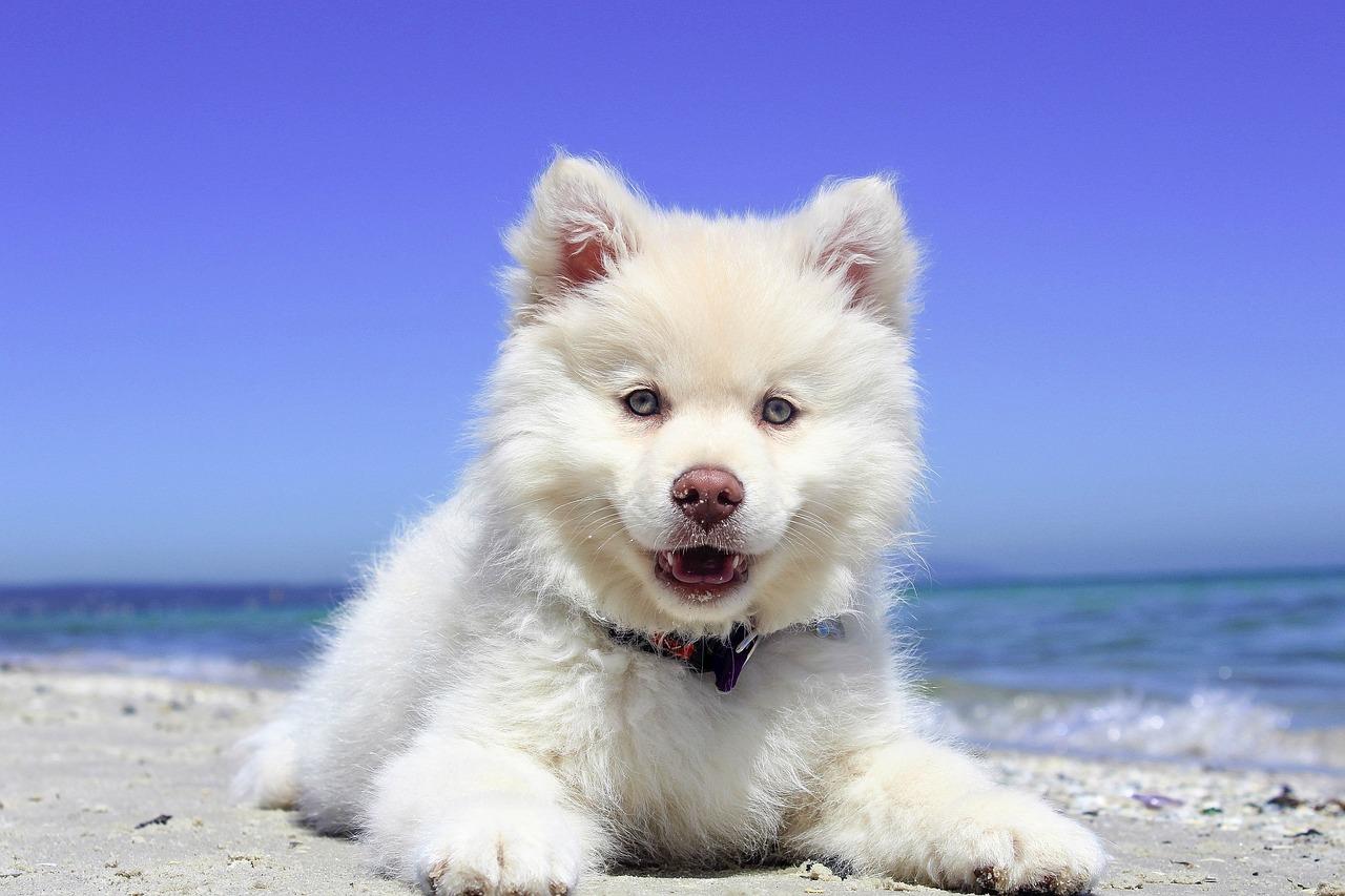 Coole Hunde, Bille, IRJGV e. V., Hundehalter, Rassehunde-Züchter, Hundehalter, Sachkundetest, Bergedorf, Info-Abend